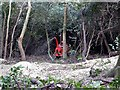 TQ7813 : Wood chipping after clearance, Beauport Park, Hastings by Patrick Roper