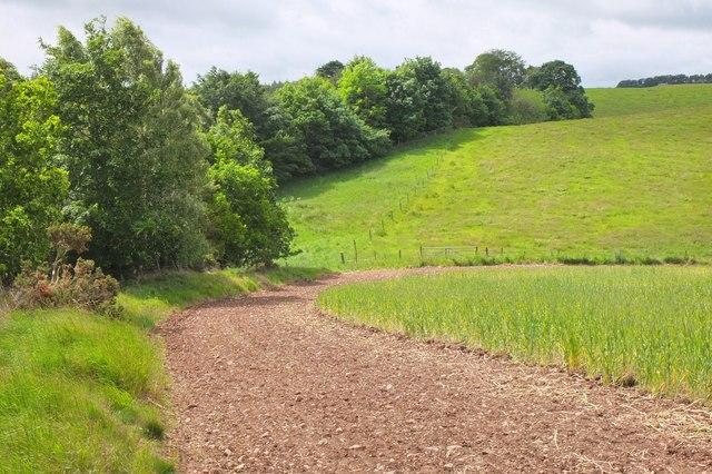 Field margin near Edgelaw