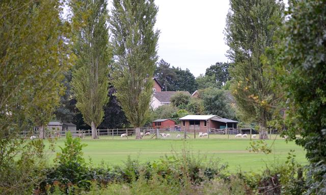 Suburban sheep, Myton, Warwick