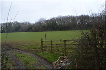 SX4761 : Field by Coombe Lane by N Chadwick