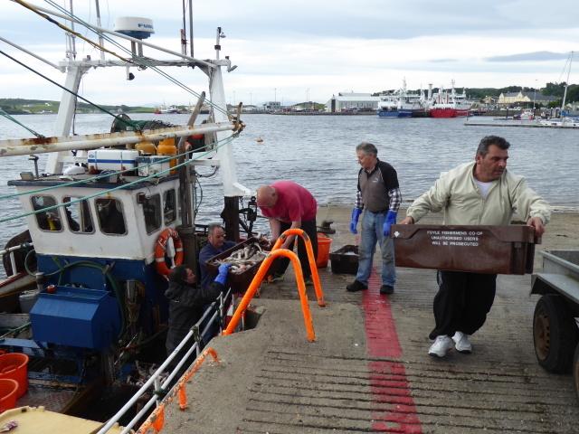 Unloading fish, Killybegs