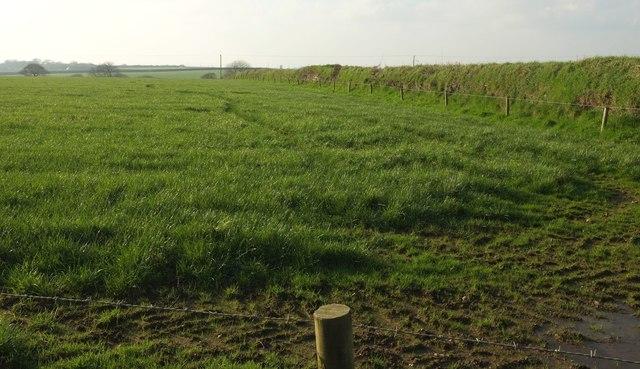 Grass field near Tregondean Farm