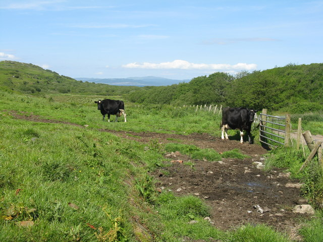 Cattle at Drumyeonmore Farm