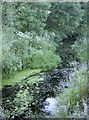 ST5762 : All sorts of aquatic plants by Neil Owen