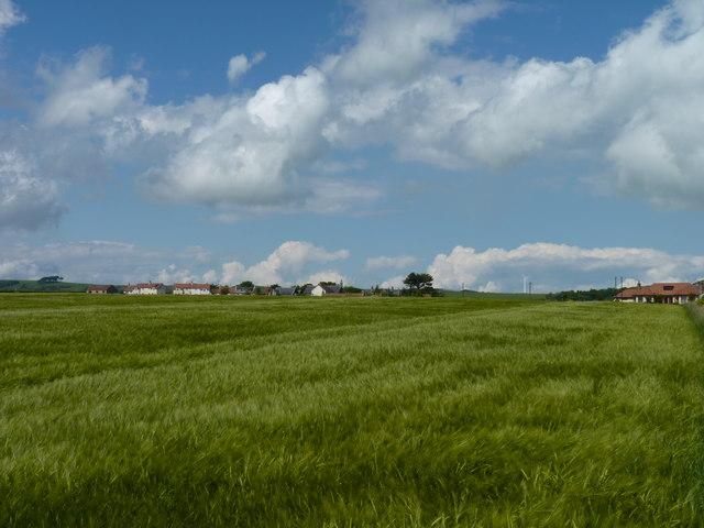 Barley near Arncroach