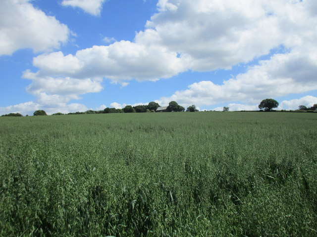 Field of oats near Mitcheldean