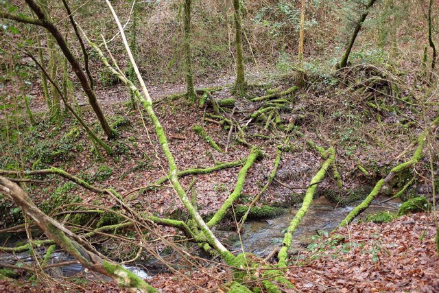 Stream below Mill Pool Wood