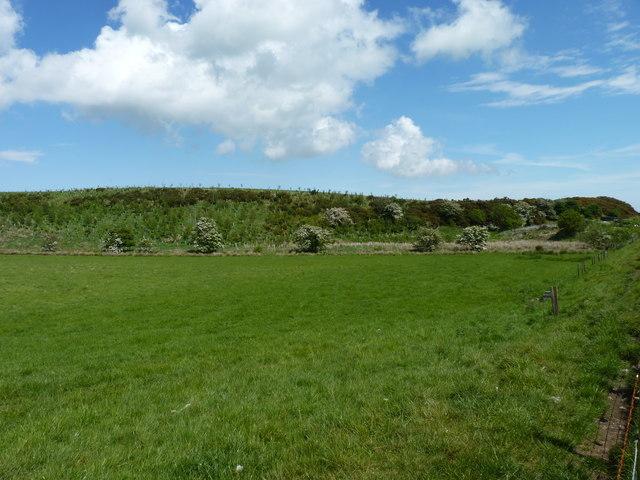 Ridged field