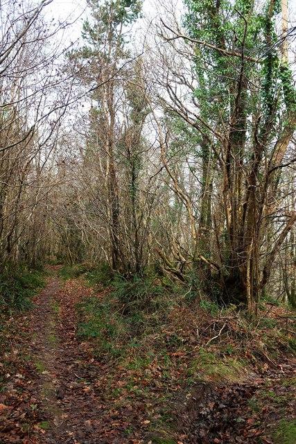 Path junction, Hustyn Wood