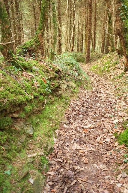 Path, Hustyn Wood