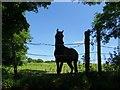 SD7412 : Horse at a fence by Philip Platt