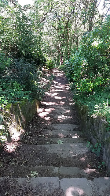 Steps down into Bramley Fall Woods