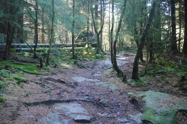Path, Tor Wood