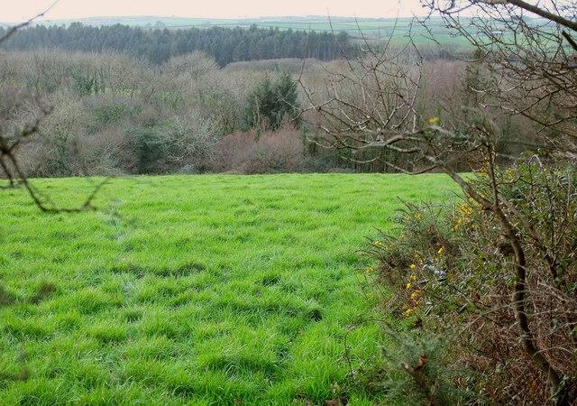 Field by Hawke's Wood