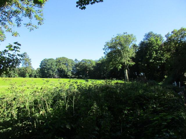 Grass field, Ballintubbrid East