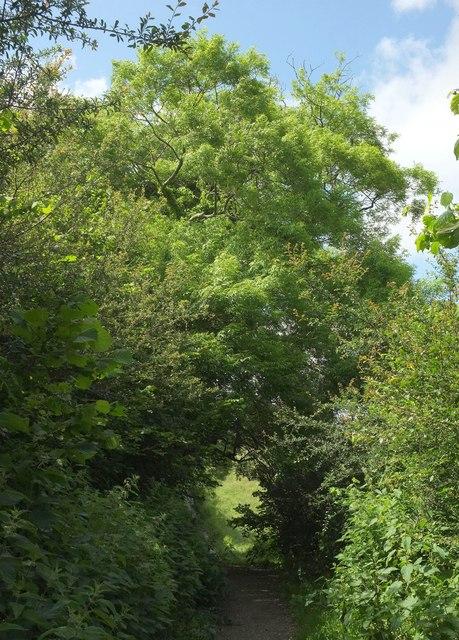 Cycle path, Conqueror Wood