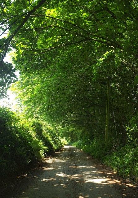 Lane near Clovelly