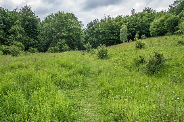 Homefield Wood