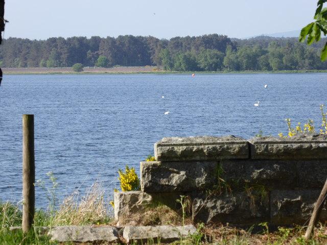Mute Swans on Loch of Skene