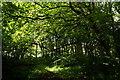 HU3954 : The main plantation at Kergord by Mike Pennington