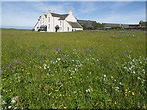 NR3488 : Wildflower meadow, Oronsay by Julian Paren