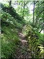 SE0627 : Halifax FP286 in a strip of woodland by Humphrey Bolton
