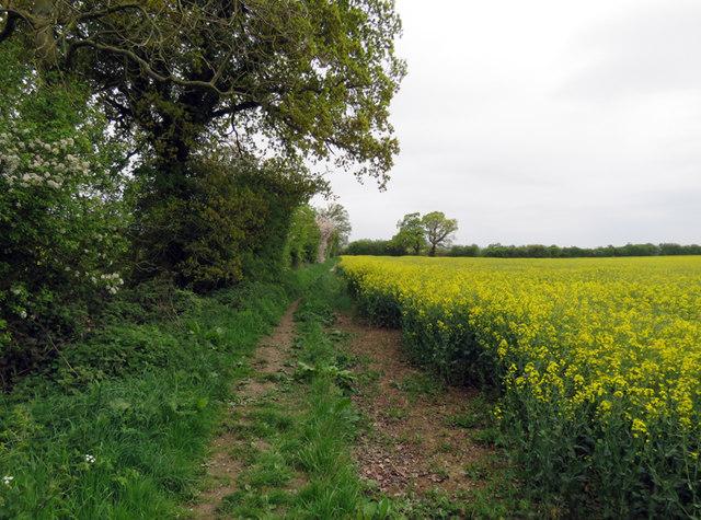 Footpath towards Bosworth Field