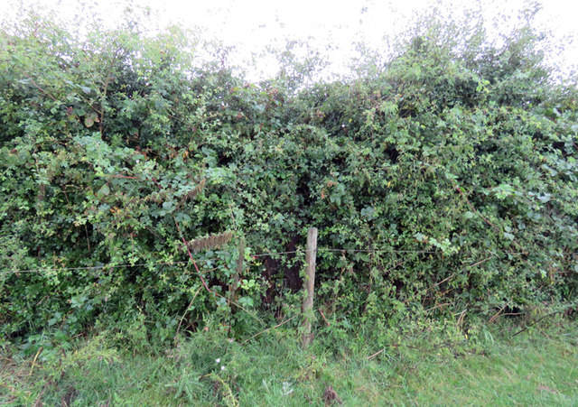 Rempstone Hill triangulation pillar in the hedge