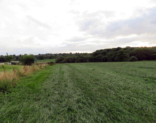 Footpath towards Grimston