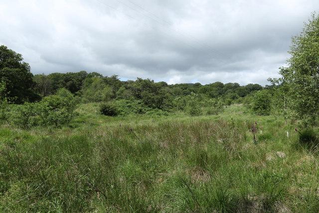 Grassland in Kentmere Hall Plantation