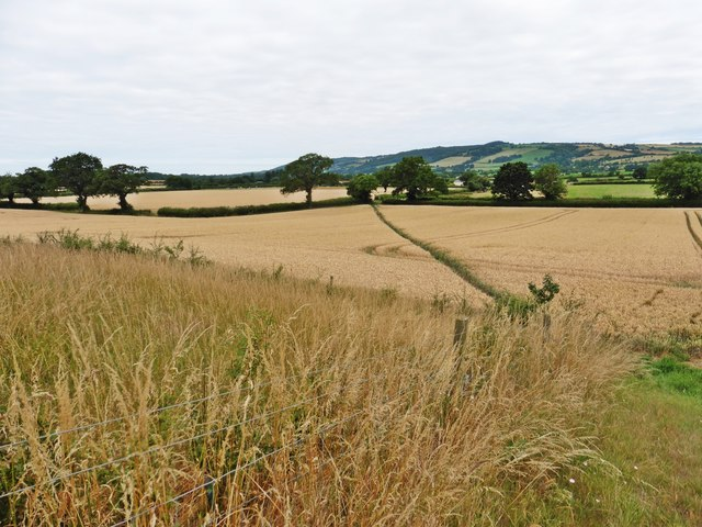 Footpath over the fields to Pickney