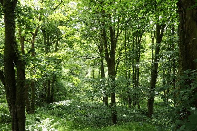 Sunlight in Whitehowe Wood