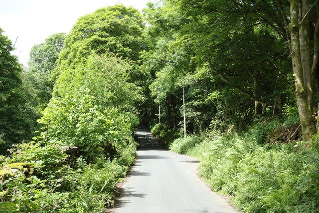 Road through Whitehowe Wood