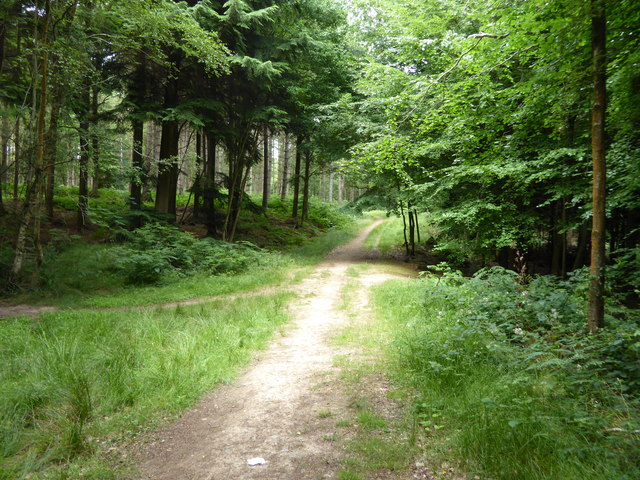 Track crosses path in woodland east of Moorhouse Road