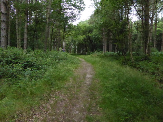 Track curves west ascending through woodland