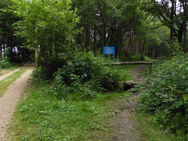 Junction of ways in High Chart Woodland