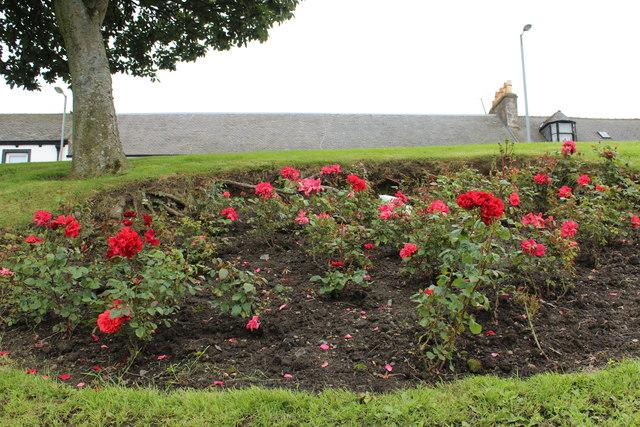 Rose Bed, Girvan