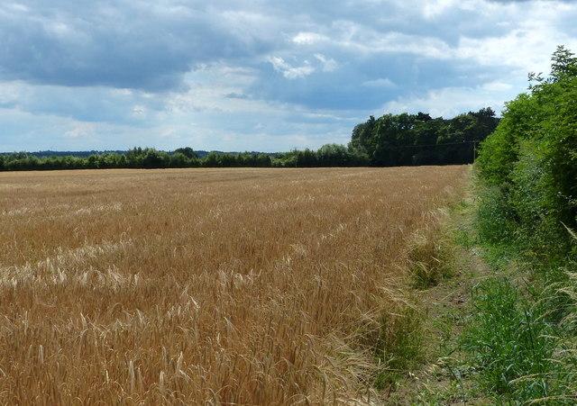 Farmland next to London Road near Great Glen