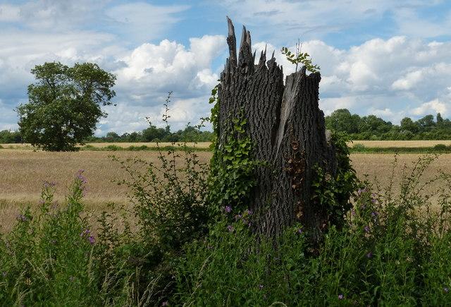 Farmland along Newton Lane