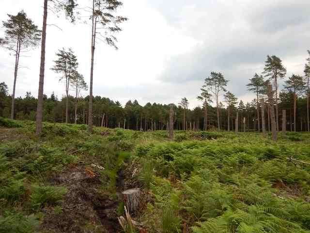 Kingsride Woodland