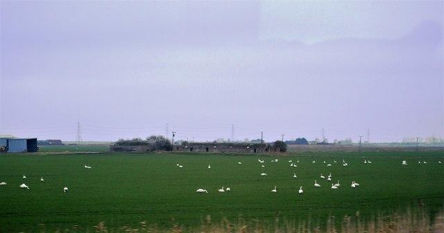 Bedlam Farm