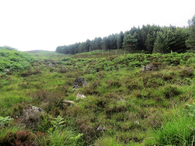 Edge of a small plantation above Mullardoch House, Glen Cannich