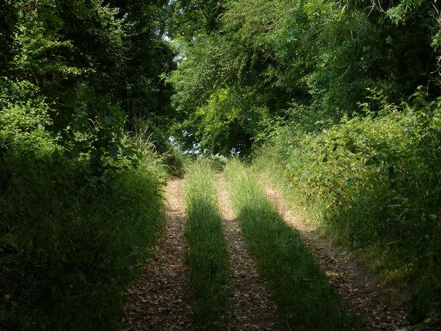 Peddars Way in the Sedgeford Plantation