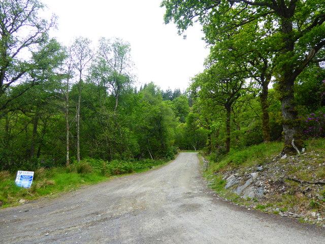 Track entrance at Glenborrodale