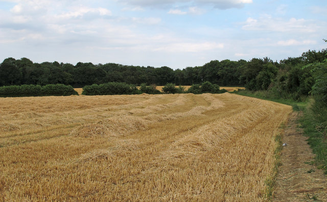 Recently Harvested Wheat Field, near Hulke's Farm, Willingale