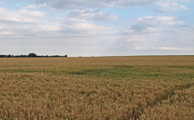 Barley Field near Colleybridge Farm, Radley Green