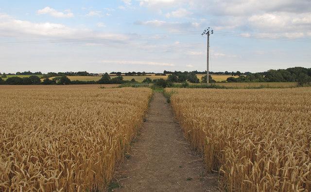 Public footpath through Wheat Field, near Butt Hatch Farm, Roxwell