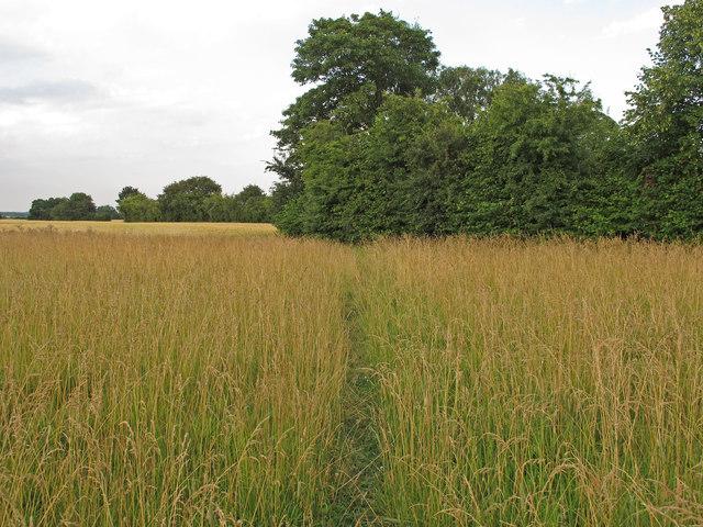 Footpath through meadow, Cooksmill Green, Roxwell