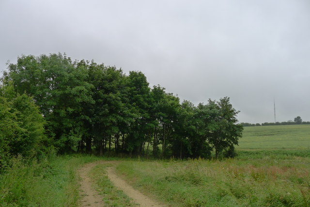 Small copse by a tributary to the River Eye