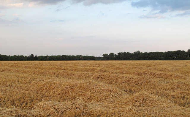Recently Harvested Wheat Field, near Spain's Hall, Willingale